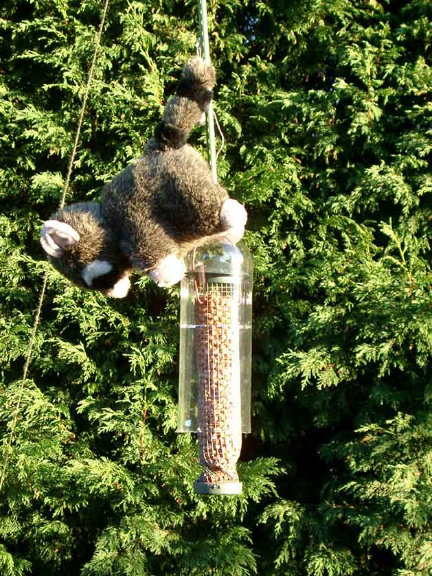 Plans For Squirrel Proof Bird Feeders