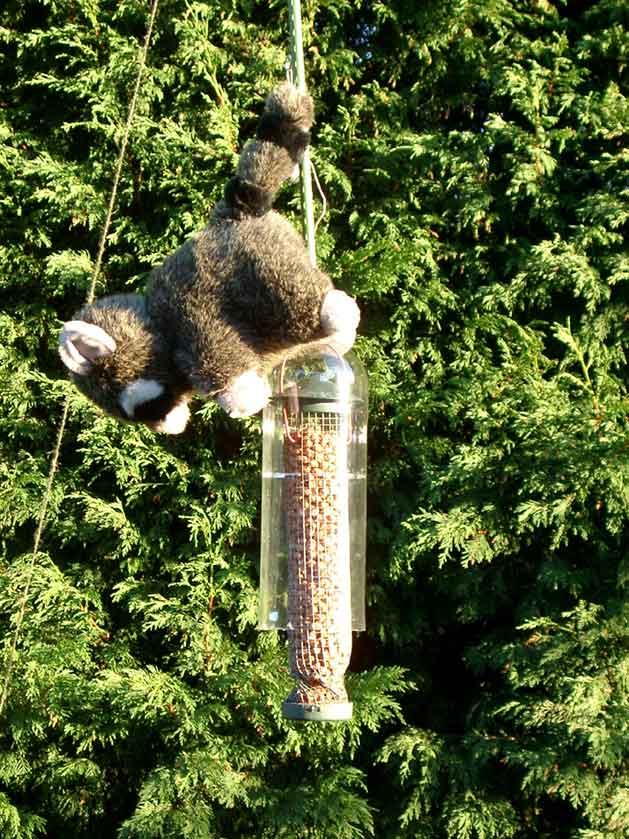 Diy Squirrel Proof Bird Feeder